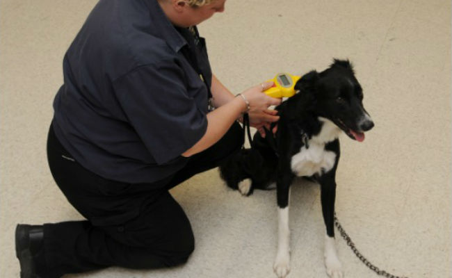 Free dog micropchipping